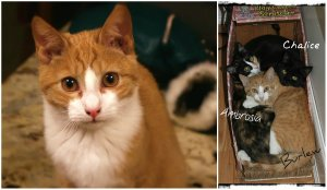 Bright-eyed Burlew (and his sisters, Chalice and Ambrosia) are all still looking for their furever families!
