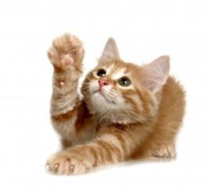 kittenspay