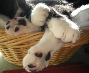 The only thing cuter than a kitty's paw bouquet is a paw bouquet with trimmed nails!